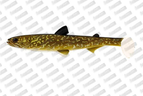 WESTIN HypoTeez ST 25cm #Natural Pike