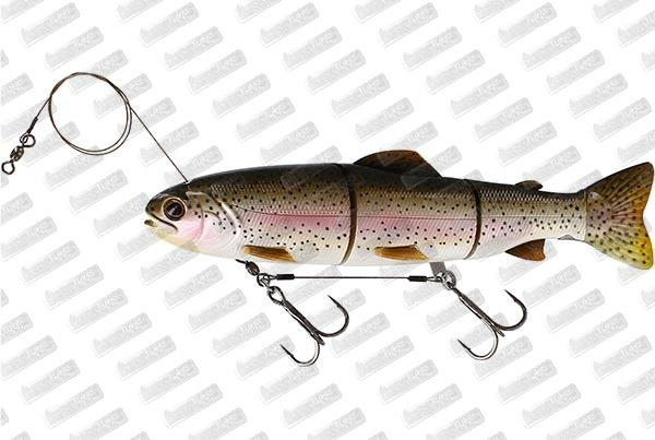 WESTIN Tommy The Trout HL Line #Rainbow Trout